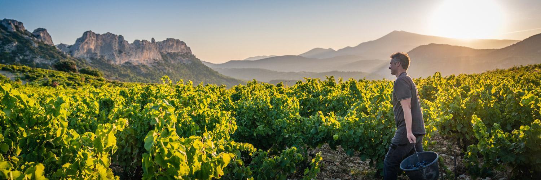 Vignoble du Domaine d'Ouréa