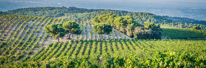 Vignoble du Vaucluse
